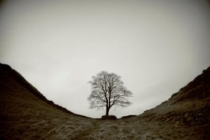 sycamore gap by y2keable