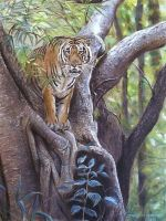 Tiger in a tree by DIXIEDEAN
