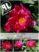 Peony pack - Unrestricted by Cat-in-the-Stock