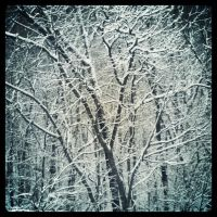 Frosted Trees by twilson390