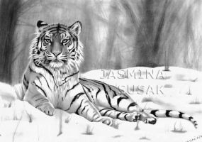 Tiger in a Snow by JasminaSusak