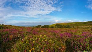 Rosewall Hill In Bloom by runique