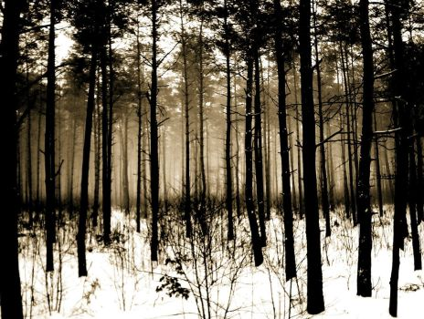 Forest.2 by sirbaton