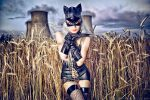 Silverrr cat in the field of gold... by MichalTokarczuk