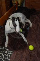 This one is my ball. by Moonstarphotos