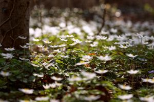spring fever by UniHydra