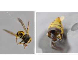 The inside of a Bee by FrankAndCarySTOCK