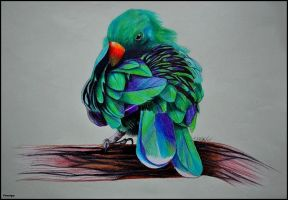 New Guinea parrot by Verenique