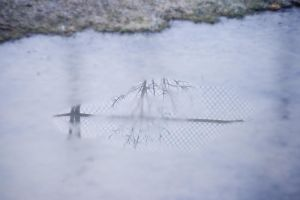 a puddle by jnnifr