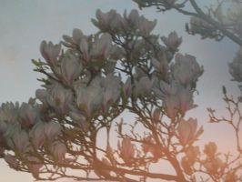 Flowers in the sunset by Hatters-Workshop