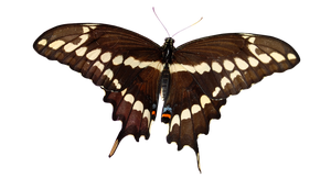 Butterfly png 2 by StockFactory