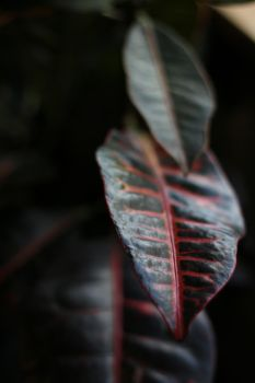 croton by fatcatinskinnytree