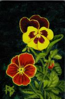 Pansies by robertsloan2