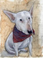 buster the bull terrier by Leadjunky