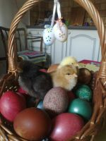 Happy Easter by Baskia