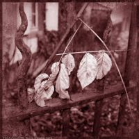 The Loss of Imaginary Leaves by EricForFriends