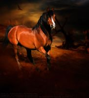 Red Dust by kingy9467