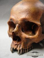 Human Skull Replica by dreggs88