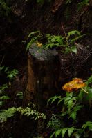Stump by Armathor-Stock