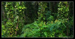 Jungley by aFeinPhoto-com