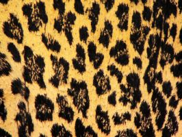 Leopard1 by HauntedVisions-Stock