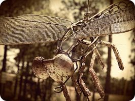 metal fly by x--photographygirl