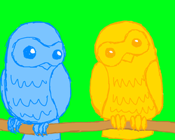 Owls by Uskall