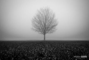 Tree in the fog by NorbertKocsis