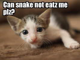 Lolcats - Not Snake Food by KittensNOTfoodplz
