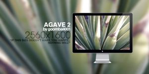 Agave 2 by Goomba4001
