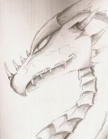 Dragon sketch by oo0ace0oo
