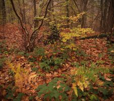 Forest of autumn by yuushi01