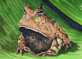 Horned Toad, ATC by waughtercolors