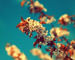 Vintage Summer by Sortvind