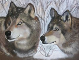 Loups a l'affut by PascalePerrot