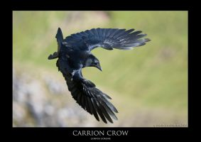 CORVUS.10 by THEDOC4