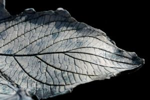 Leaf Detail by Lit-Smith