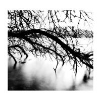 Tree over water by asthecrowflies