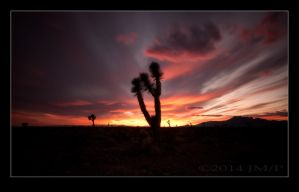 Stormy Sunset with Joshua Tree by jdmimages