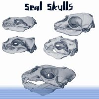 Seal Skulls by Urceola