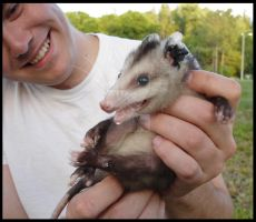 Opossum by nowherekid85