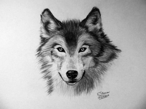 Wolf Drawing by LethalChris