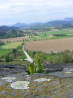 Small plant in rock rift by SzisziF1