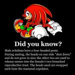 Fun Facts by MadForHatters