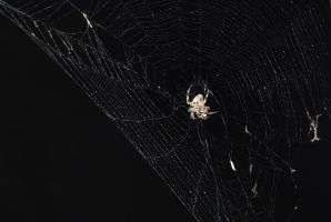 Spider Web by Stock-by-Kai