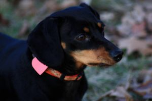 Holly in profile by magicia