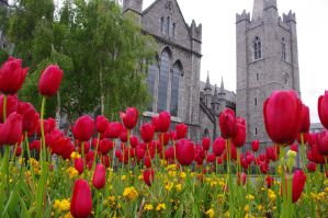 St Patrick's Cathedral flowerish by CleaLlyfr