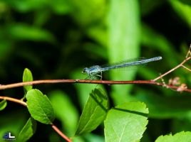 Tightrope Walker by imonline
