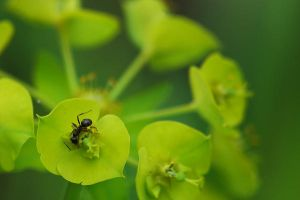 Ant on a Flower by Oni-mt