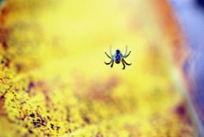 Spider by faux-tograph-ie